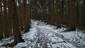 190207_snow_07